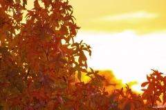 Sonnenuntergang im Ahorn